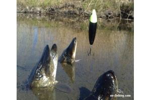 Скачать картинки на тему рыбалка » Скачать лучшие картинки ...