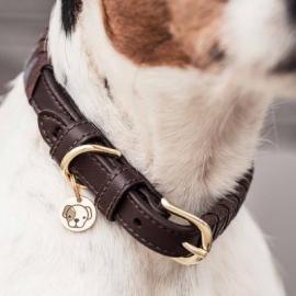 Kentucky Dogwear Dog Collar Triangle
