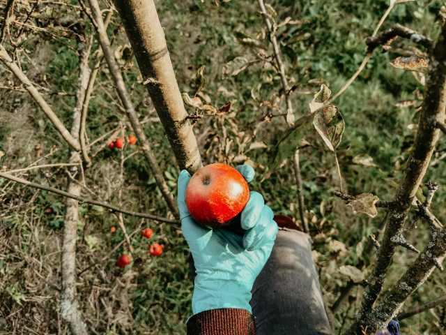 Recepty z jabĺk