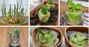 8 druhů zeleniny, které si vypěstujete u vás na parapetu