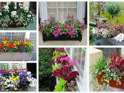 Inspirace jak proměnit truhlíky a květináče v krásné dekorace na parapety