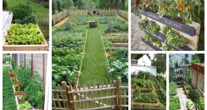 Krásné a přehledné užitkové zahrádky pro pěstování
