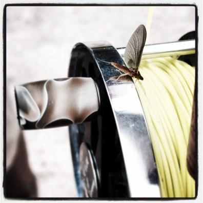 German Mayfly on a Vosseler Fly Reel