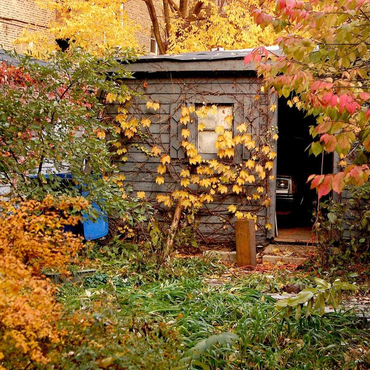 Autumnal landscape in an enclosed backyard with garage visible