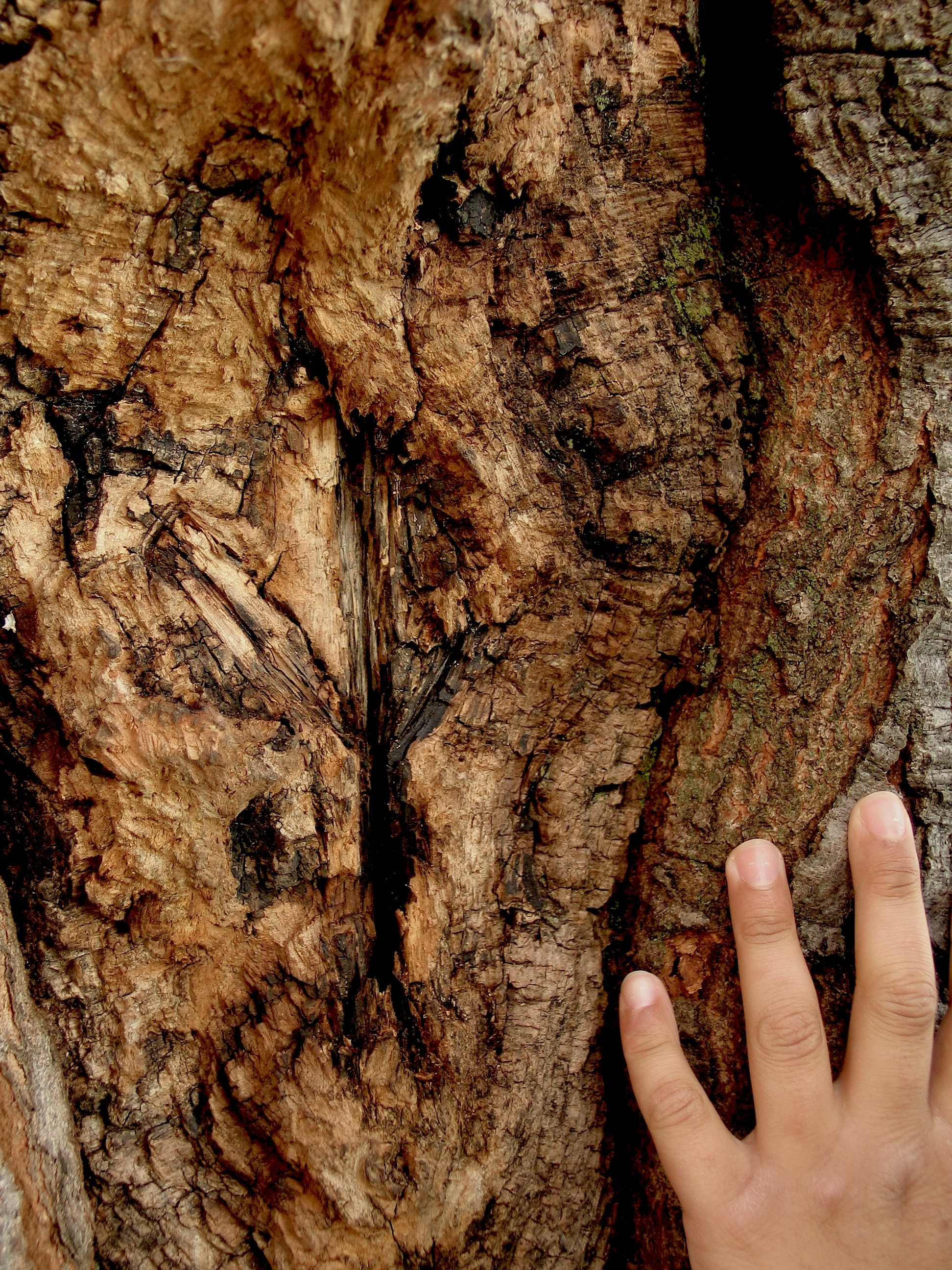 A young hand on the bark of a tree