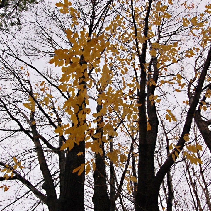 A phalanx of small orange leaves cling to a spindly array of otherwise bare branches.