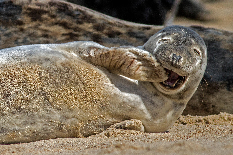 Biology Grey Seal Level 1 Activity For Kids