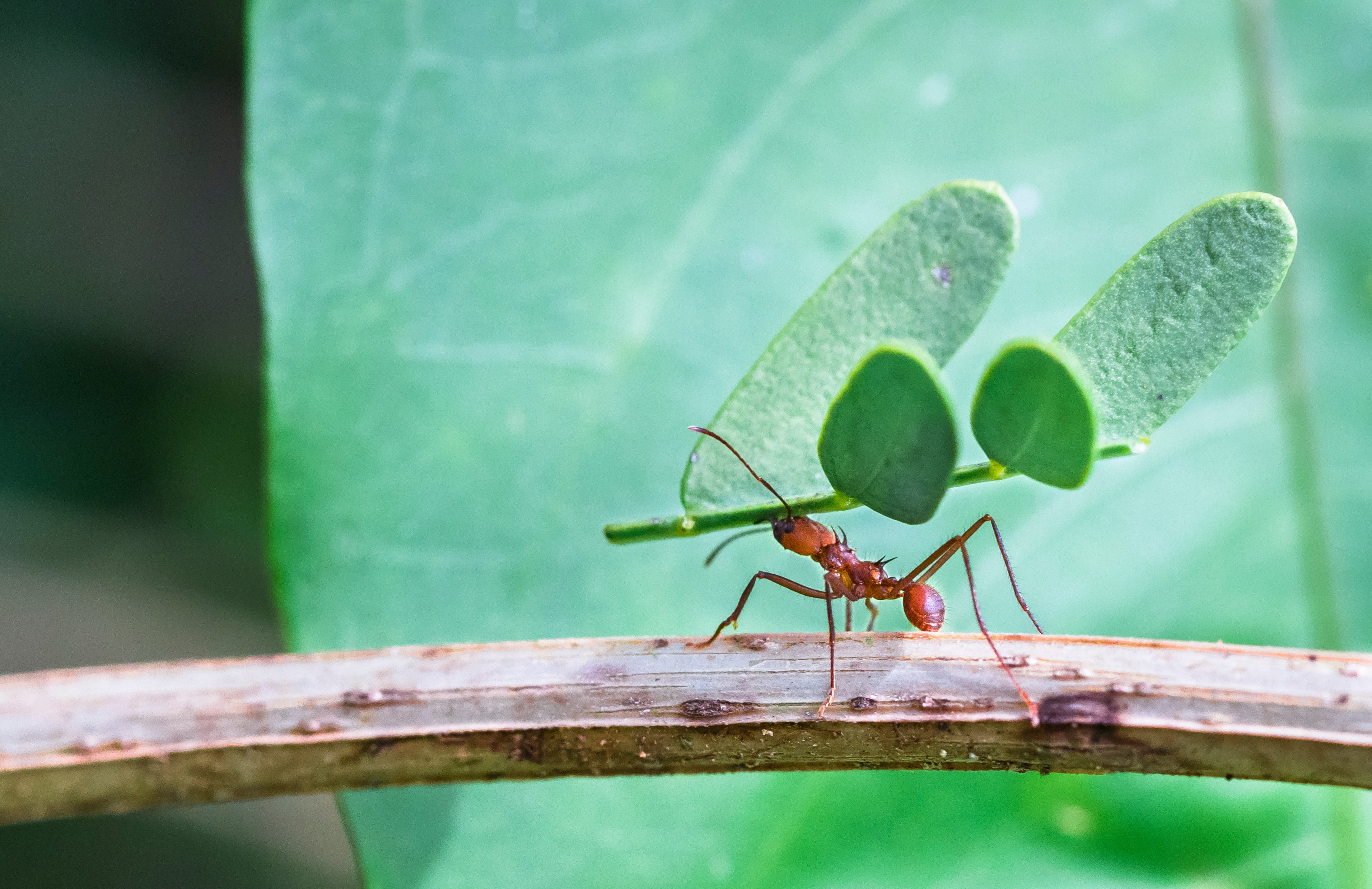 Biology All About Insects Level 1 Activity For Kids