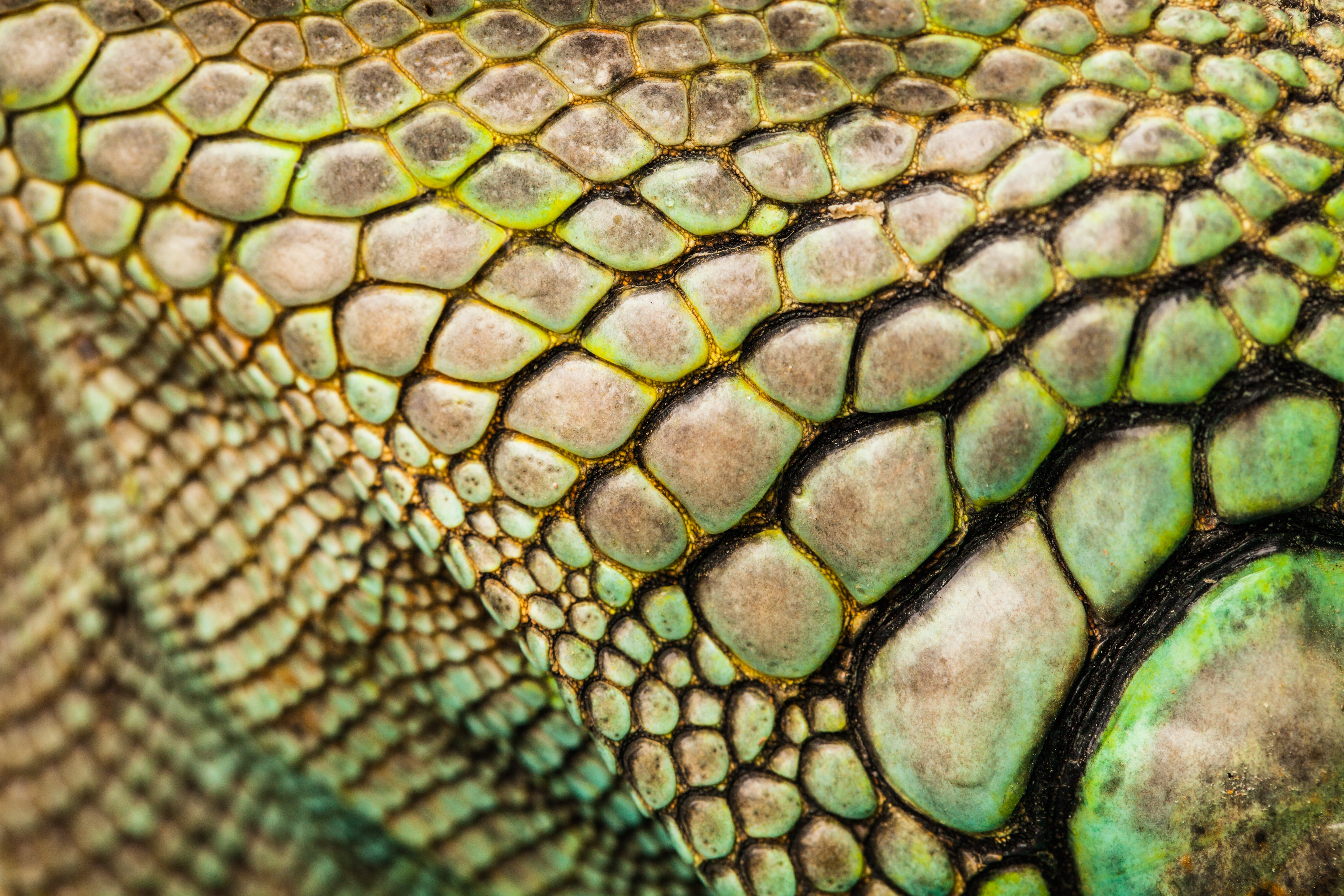 Biology All About Reptiles Level 1 Activity For Kids