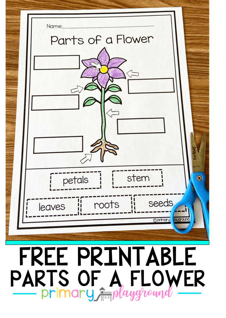 Free Printable Parts Of A Flower