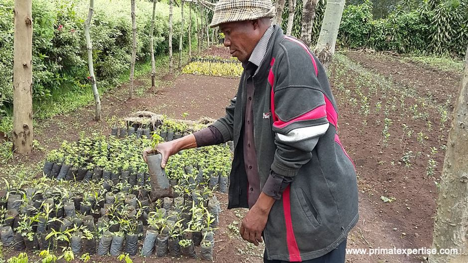 Ir Agronomist Obula from CRSN-Lwiro inspecting the plantlets grown from seeds found intact in ape dungs