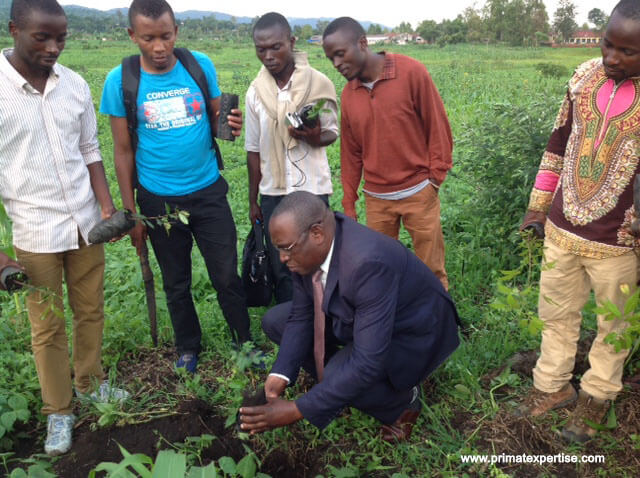 Professor JC Mubalama, the Rector of UNIC-Lwiro planting a seedling from Gorilla dung on the University green zone.
