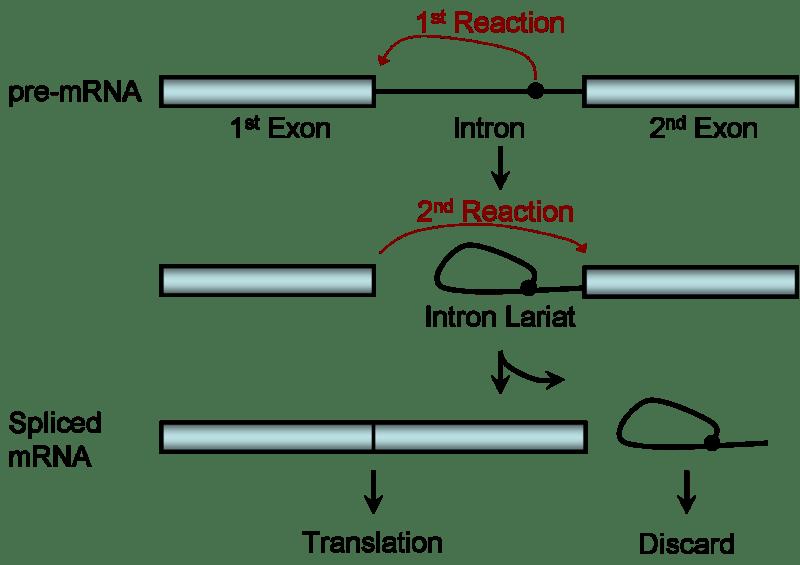 Splicing Process