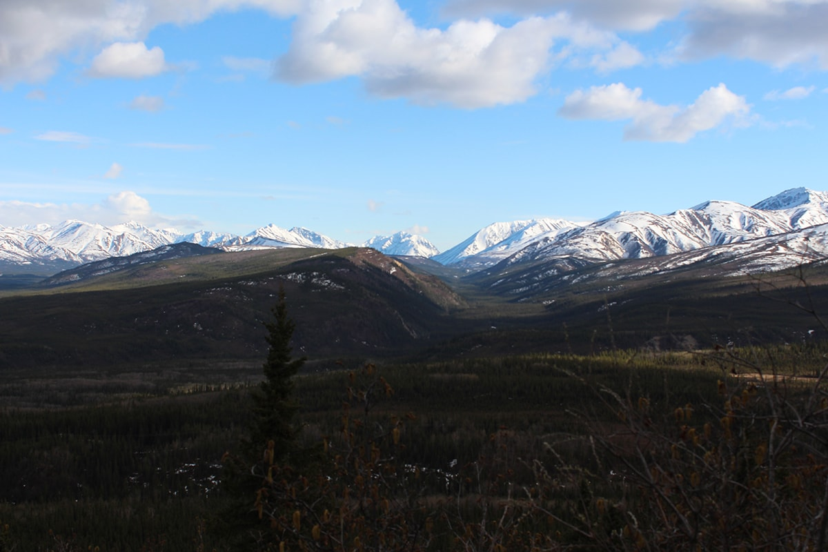 Glaring white mountain range in Denali National Park Alaska