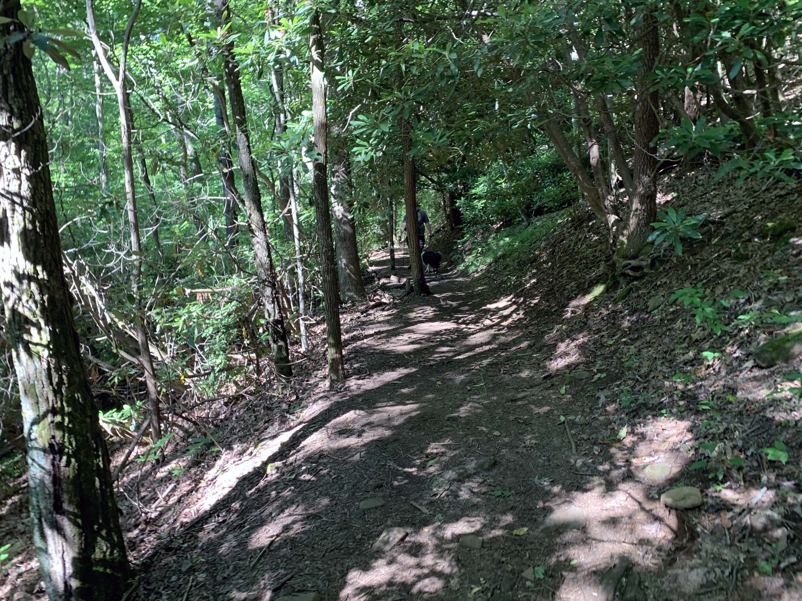 Tree covered trail on the Blood Mountain and Freeman Loop Trail
