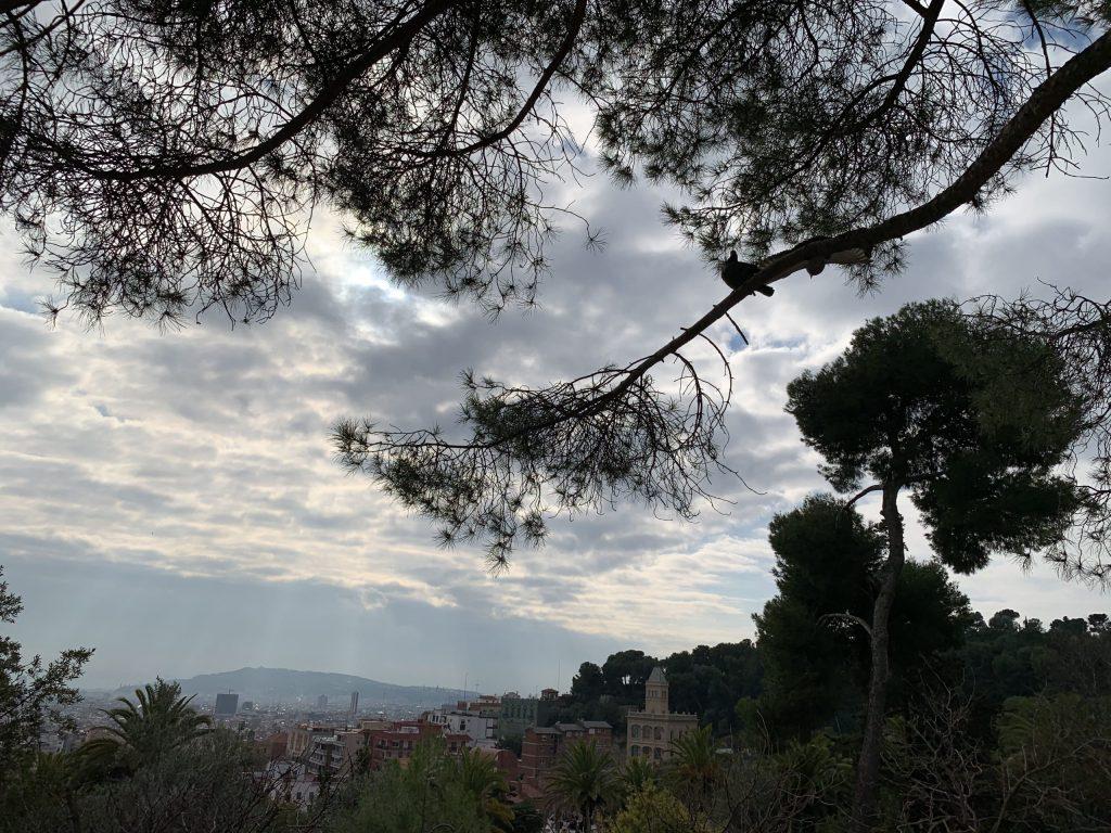 Trees frame horizon of round mountains