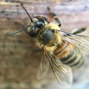 Beekeeping Classes