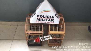Photo of PMMA REALIZA APREENSÃO DE PÁSSAROS EM TEIXEIRAS