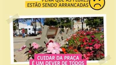 Foto de MUDAS ESTÃO SENDO ARRANCADAS DA PRAÇA SILVIANO BRANDÃO