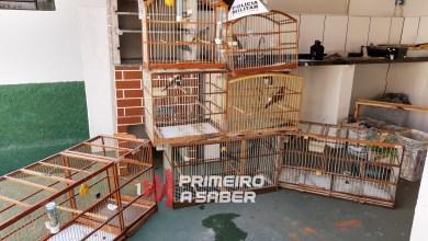 Photo of Homem é preso com pássaros silvestres em Paula Cândido