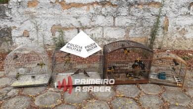 Photo of Homem é autuado em mais de R$ 30 mil por ter em cativeiro pássaros silvestres