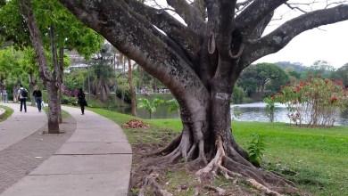 Photo of Remoção de árvore fecha via de entrada da UFV na manhã desta sexta (08)