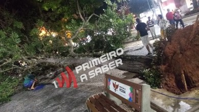 Foto de Árvore cai na Praça Silviano Brandão e trânsito fica interditado no fim de semana