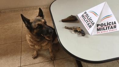 Photo of PM em operação com a cadela Yra, localiza arma escondida em terreno em Ubá