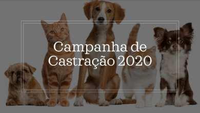 Photo of Prefeitura de Ervália divulga informações sobre Campanha de Castração 2020