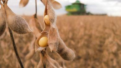Photo of Pesquisa da UFV desenvolve nova técnica biotecnológica para combater praga da soja