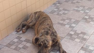 Photo of Cãozinho precisa de um lar
