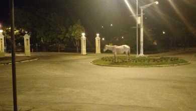 Foto de Prefeitura e Polícia Militar do Meio Ambiente promovem ação para recolhimento de animais nas ruas
