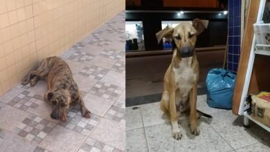 Photo of Cachorrinhos estão correndo risco real de morte nas ruas e precisam de um lar