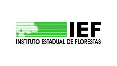 Foto de IEF abre 265 vagas para brigadistas florestais com salário de R$ 1.358,50