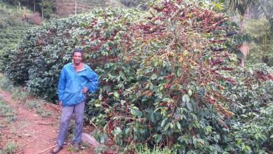 Foto de Programa ATeG Café em Araponga alcança produtividade, qualidade na produção e envolvimento dos jovens