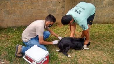 Foto de Último sábado de vacinação antirrábica na zona urbana de Viçosa