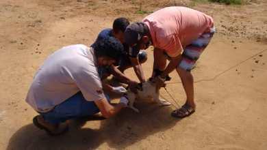 Foto de Nova etapa da vacinação antirrábica em Viçosa