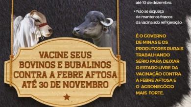 Foto de Vacinação contra febre aftosa em Minas vai até essa segunda-feira (30)