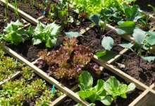 Foto de Senar divulga curso de Trabalhador Agrícola na Olericultura e Horta caseira em Viçosa