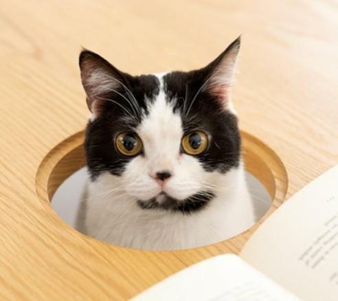 猫モデル オセロ