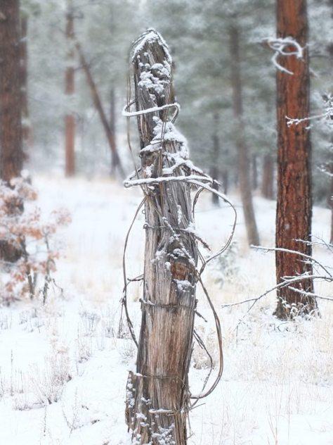 WinterHikingSouthernRockies - qDSCF6575.jpg