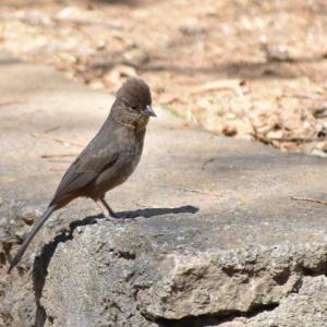 pájaros aves morelia ACG 2