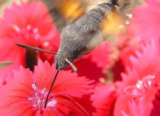 Casi la mitad de insectos desaparecerían en 10 años