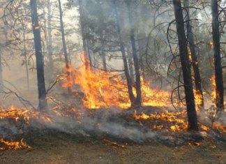Incendios forestales afectan 110 hectáreas en Tamaulipas