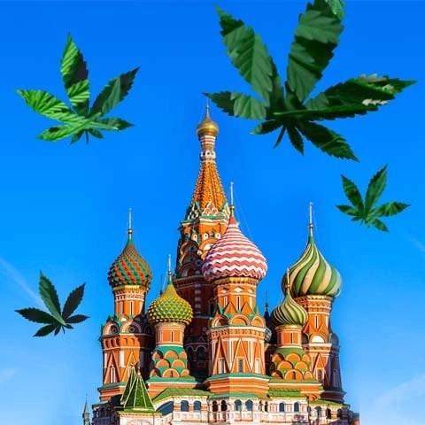 La produzione di Canapa in Russia