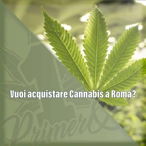 vuoi-acquistare-cannabis-light-a-roma