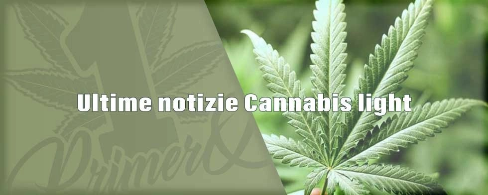 ultime-notizie-cannabis-light-1