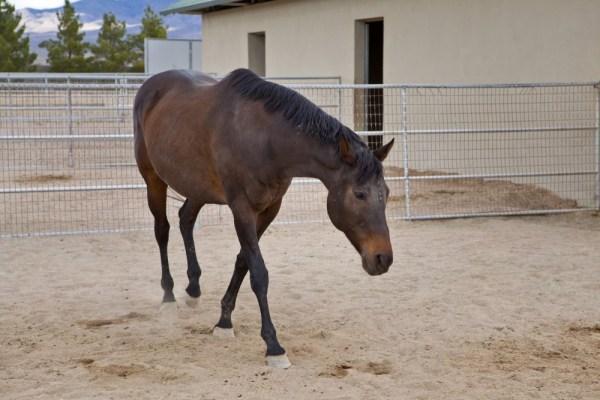 """""""Temperance Peak"""" Horse"""