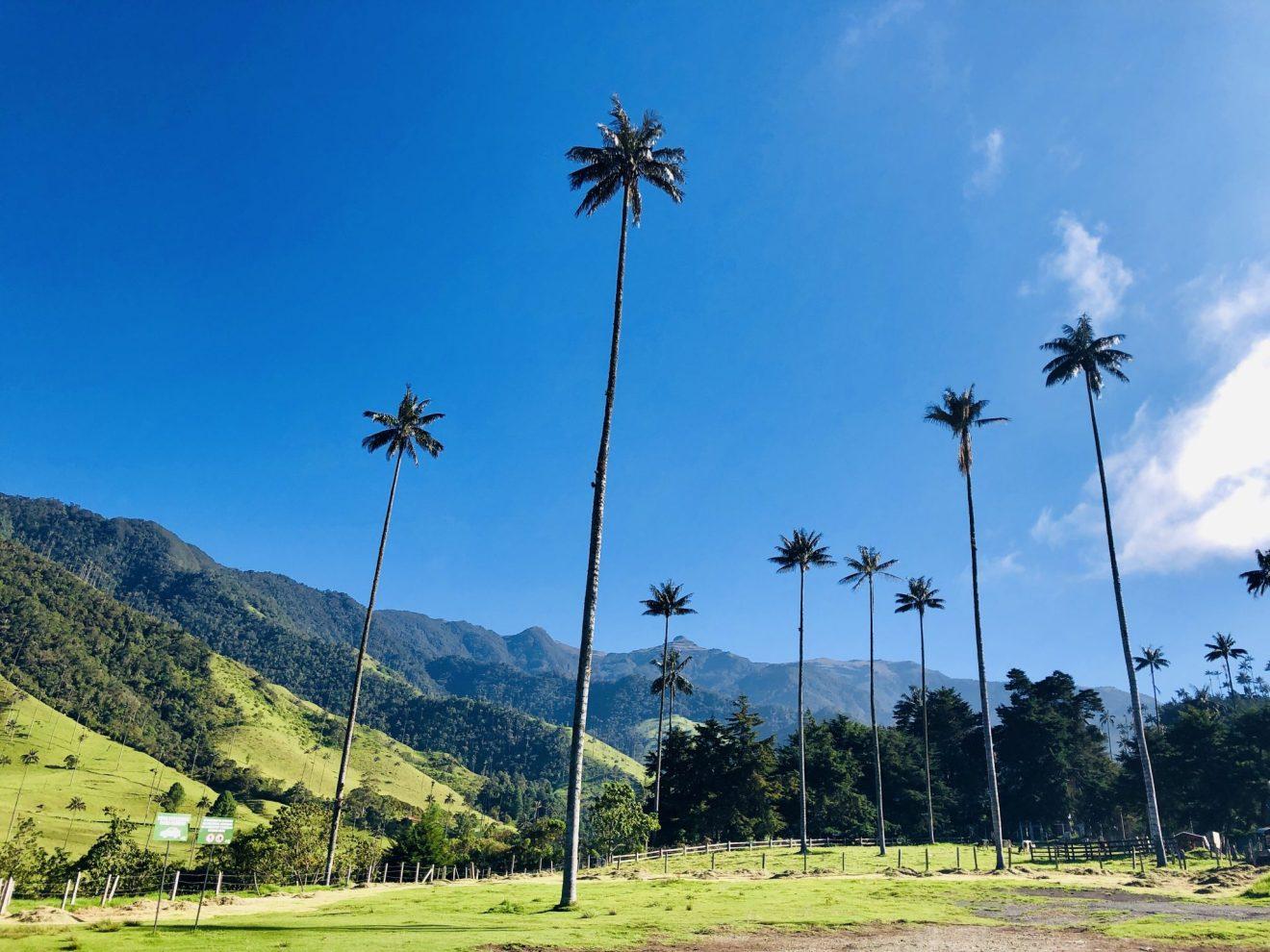 Bosques de las Palmas