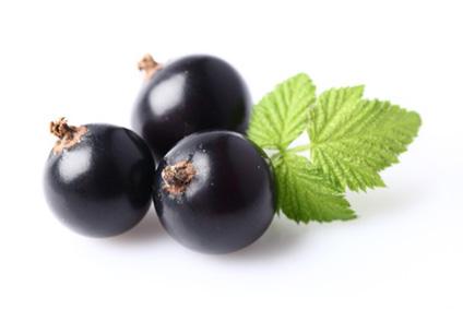 """Résultat de recherche d'images pour """"cassis fruit"""""""